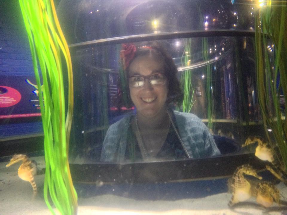 Bristol Aquarium seahorses