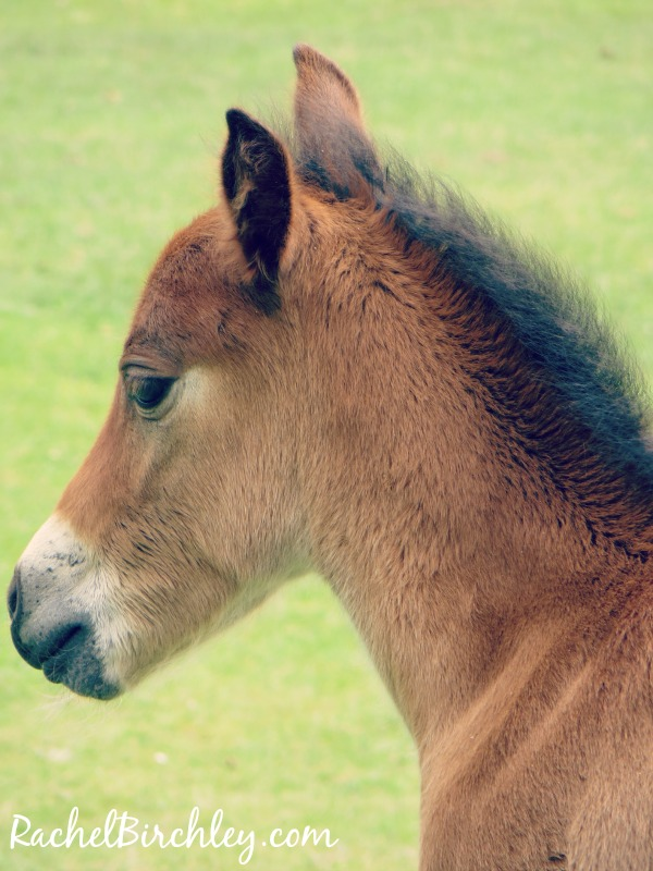 Cute foal in the New Forest