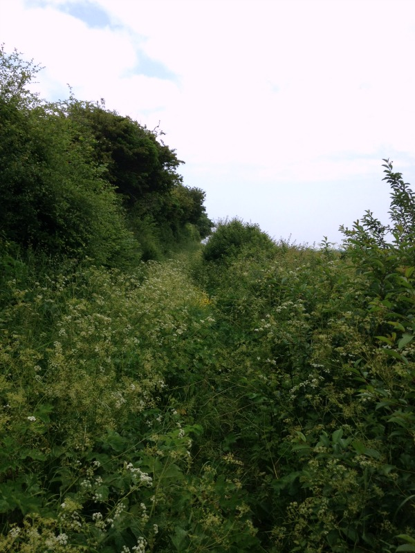 Overgrown footpath - Whitecliffs Country Trail