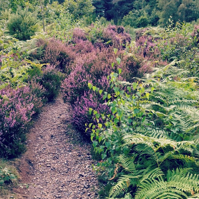 Path through fern and heather by Faesten Dic Joyden's Wood